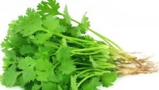 Fresh coriander - 1 bunch